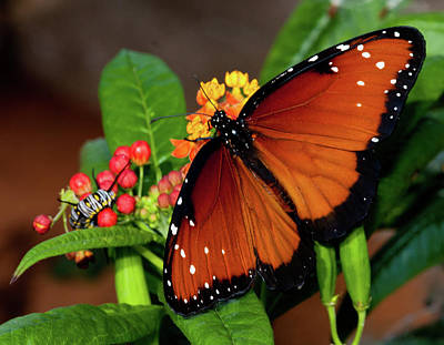 Insect Photograph - Caterpillar And Butterfly by Terry Porter