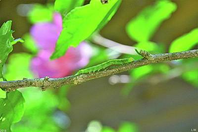 Photograph - Caterpillar by Lisa Wooten