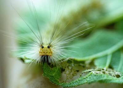Pasta Al Dente - Caterpillar Macro by Cathy Kovarik