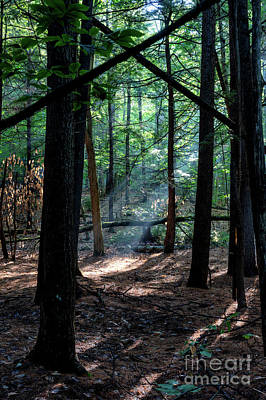 Photograph - Cathedral in the Woods by David Harwood