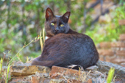 Photograph - Cats Always Watching by JAMART Photography