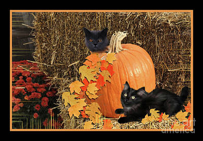 Mixed Media - Cats And  Pumpkin by Elaine Manley