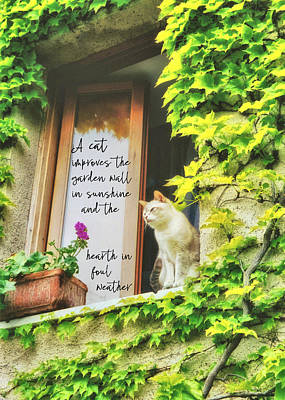 Photograph - Cats Eye View Quote by JAMART Photography