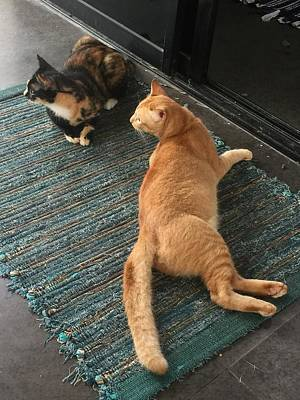 Photograph - Cats Interrupted by The Happy Cat