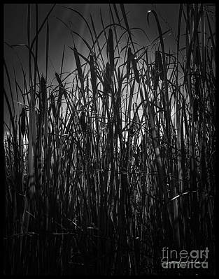 Photograph - Cattail Shadows by Jennifer Lake