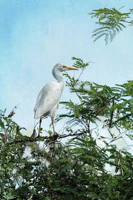 Photograph - Cattle Egret In A Tree by Belinda Greb