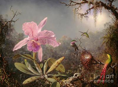 Painting - Cattleya Orchid And Three Hummingbirds, 1871 by Martin Johnson Heade