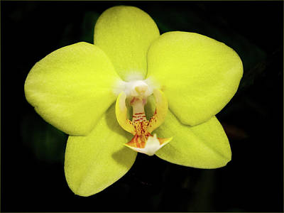 Photograph - Caution Yellow Orchid by Jean Noren