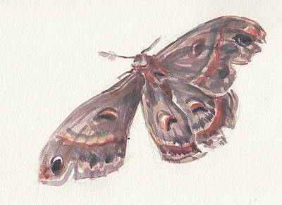 Painting - Cecropia Moth by Abby McBride