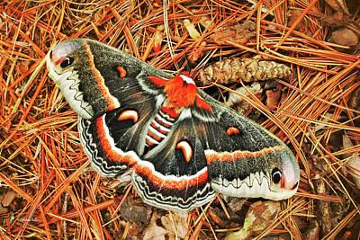 Photograph - Cecropia Moth by Christina Rollo