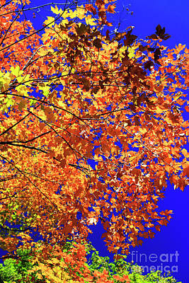 Photograph - Central Park Fall Colors New York City by John Rizzuto