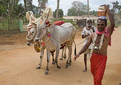 Karnataka Photograph - Ceremonial Bullocks Led To A Ceremony by Clive Limpkin