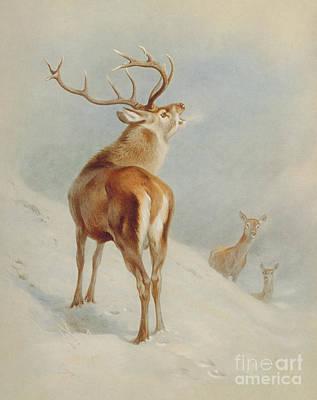 Painting - Cervus Elaphus, Red Deer by Archibald Thorburn