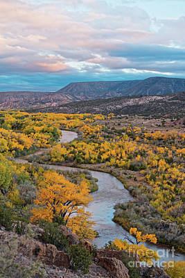 Photograph - Chama River Valley Golden Cottonwoods - Abiquiui Rio Arriba County New Mexico Land Of Enchantment by Silvio Ligutti