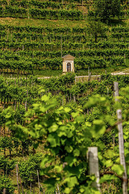 Farm House Style - Chapel in the vineyard by Pavel Rezac