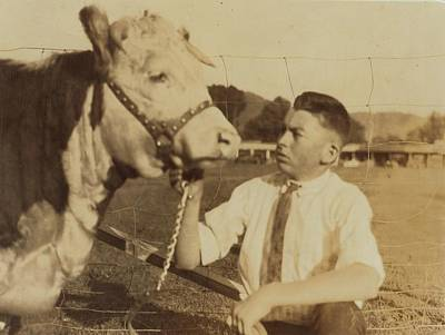 Painting - Charlie And His Hereford Heifer by Celestial Images