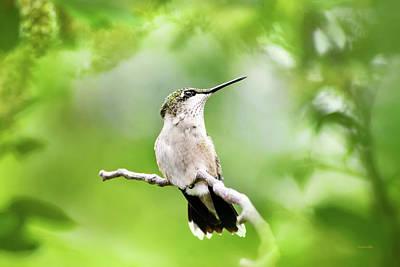 Photograph - Charming Hummingbird by Christina Rollo