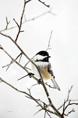 Charming Winter Chickadee Art Print