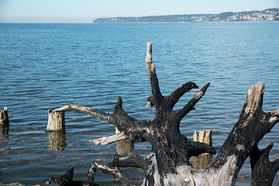 Photograph - Charred Driftwood On Semiahmoo Bay by Tom Cochran