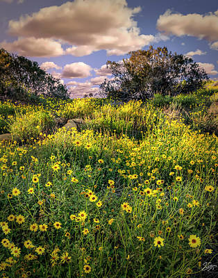 Photograph - Chatsworth Wildflower Bloom by Endre Balogh