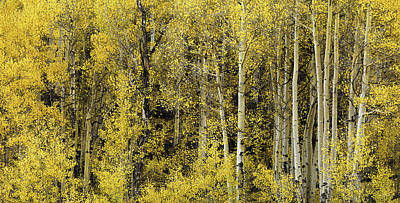 Photograph - Cheerful Yellow by Leland D Howard