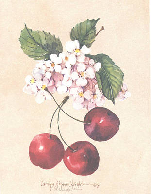 Wall Art - Painting - Cherries And Blossoms by Carolyn Shores Wright