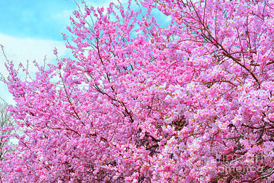 Royalty-Free and Rights-Managed Images - Cherry Blossom Pink Abundance by Regina Geoghan