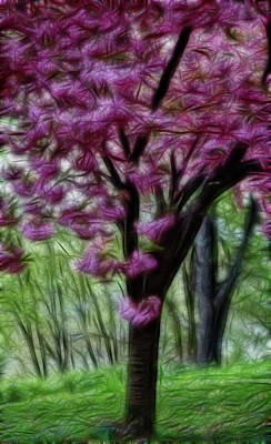 Photograph - Cherry Blossom Tree by Crystal Wightman