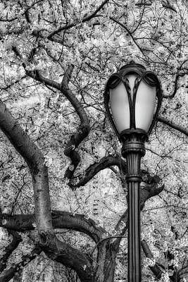 Photograph - Cherry Blossoms At Central Park Nyc Bw by Susan Candelario