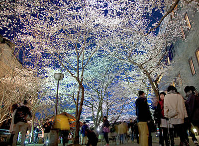 Photograph - Cherry Blossoms At Night by Grant Faint