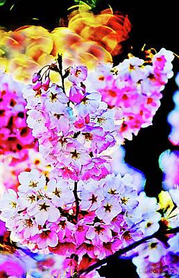 Photograph - Cherry Blossoms Close-up #1 by Bill Jonscher