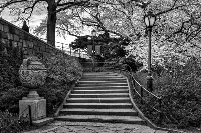Photograph - Cherry Blossoms In Central Park Nyc Bw by Susan Candelario