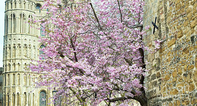 Photograph - Cherry Tree Blossom In Ely by Tim Gainey