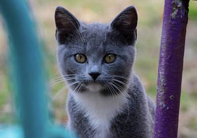 Photograph - Chester Cat by Buddy Scott