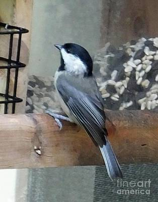 Photograph - Chickadee 8 by Lizi Beard-Ward