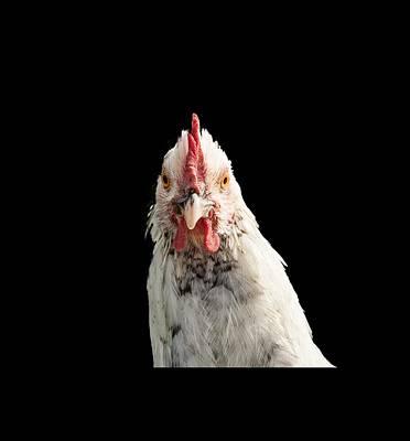 Photograph - Chicken Head by Jean Noren