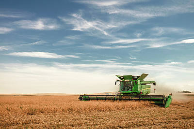 Photograph - Chickpeas Harvest Evening by Todd Klassy