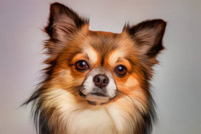 Chiwawa Portrait Wall Art - Painting - Chihuahua Dog Portrait by Vincent Monozlay