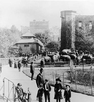 Children In Central Park Zoo Art Print by Hulton Archive