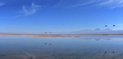 Photograph - Chile - Chaxa Salt Lagoon - Atacama Desert by Jeremy Hall