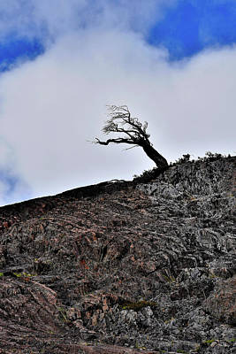 Photograph - Chile - Wind Stunted Tree - Patagonia by Jeremy Hall