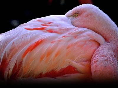 Chilean Flamingo Art Print by Yuko Smith Photography