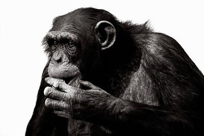 Photograph - Chimpanzee Pan Troglodytes Against by David Tipling