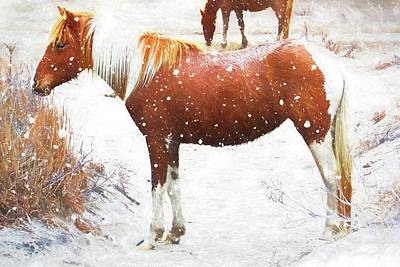 Photograph - Chincoteague Snow Pony by Alice Gipson
