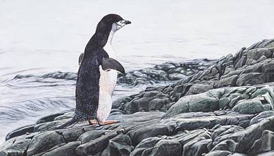 Painting - Chinstrap Penguin On A Rock By Alan M Hunt by Alan M Hunt
