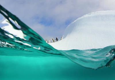Photograph - Chinstrap Penguins On Iceberg by Eastcott Momatiuk