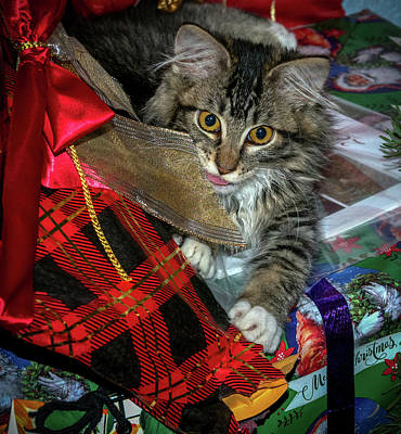 Photograph - Christmas Cat by Jean Noren