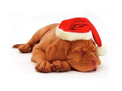Digital Art - Christmas Dog Portrait by Alexander Del Rey