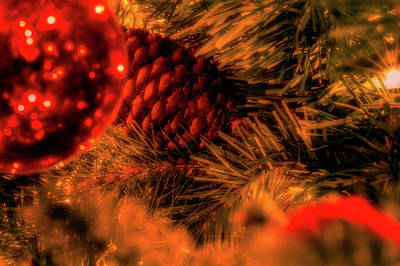 Photograph - Christmas Evergreen by Allin Sorenson