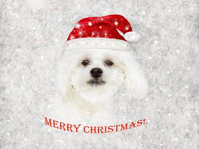 Maltese Dog Christmas Cards Wall Art - Photograph - Christmas Maltese Puppy by Zina Stromberg